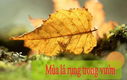 Bài soạn mùa lá rụng trong vườn của Ma Văn Kháng ở ngữ văn lớp 12