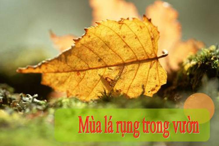 mua-la-rung-trong-vuon-cua-van-khang