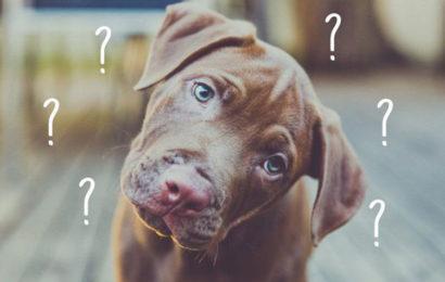 Tìm hiểu nguyên nhân chó hay nhỏ dãi ? và bệnh dại là gì ?