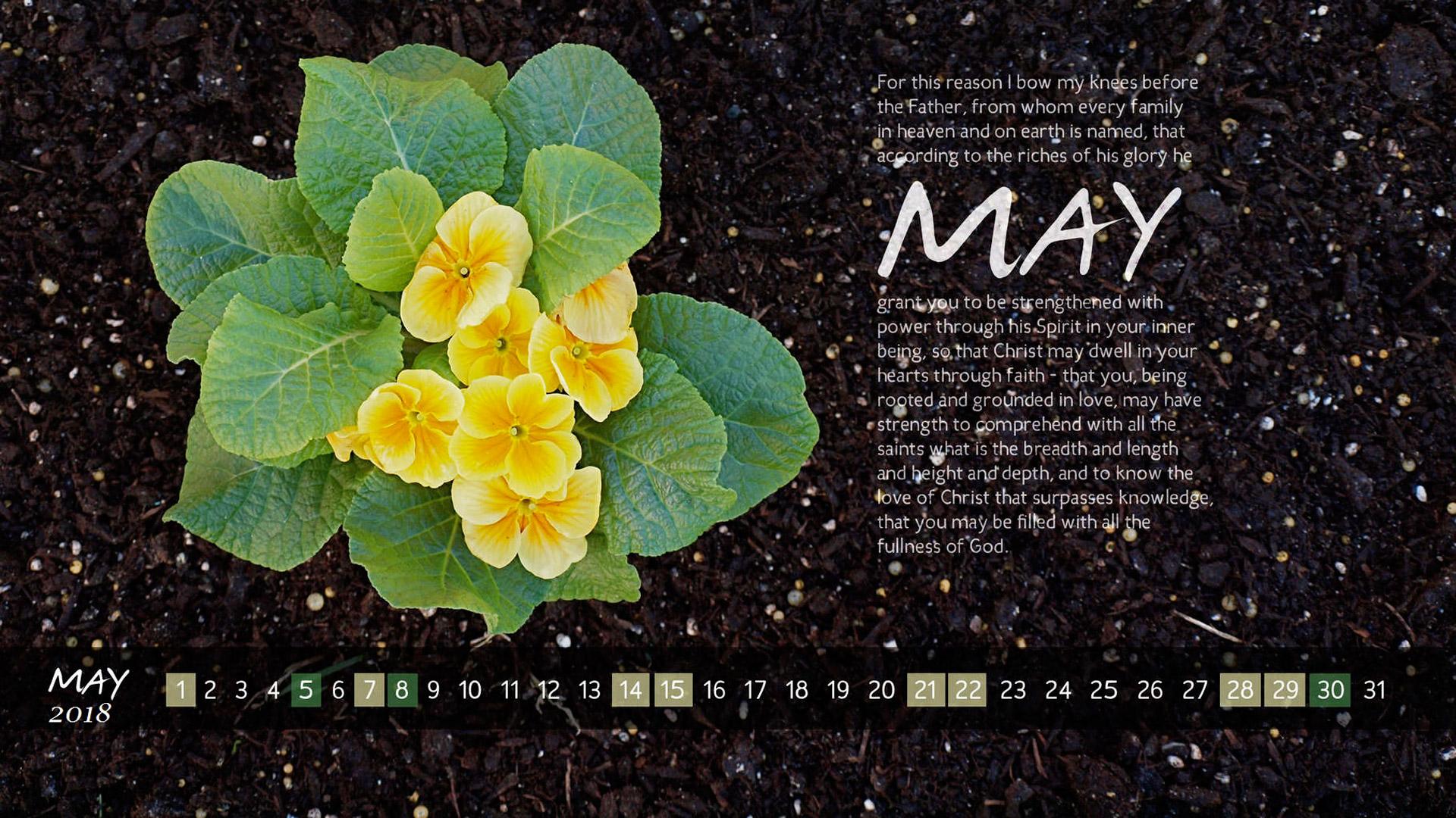 hinh-nen-chao-thang-5-hello-may-20