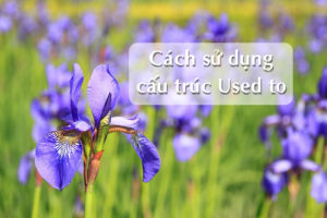 tim-hieu-cach-su-dung-cau-truc-used-to-trong-tieng-anh