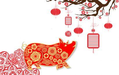 Ảnh chúc mừng năm mới, bộ ảnh chú lợn bên hoa đào cực đẹp năm 2019