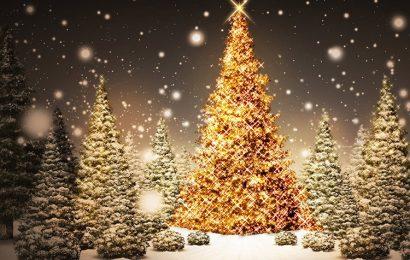 Bộ hình nền giáng sinh 2019 cây thông noel, christmas tree cho iphone