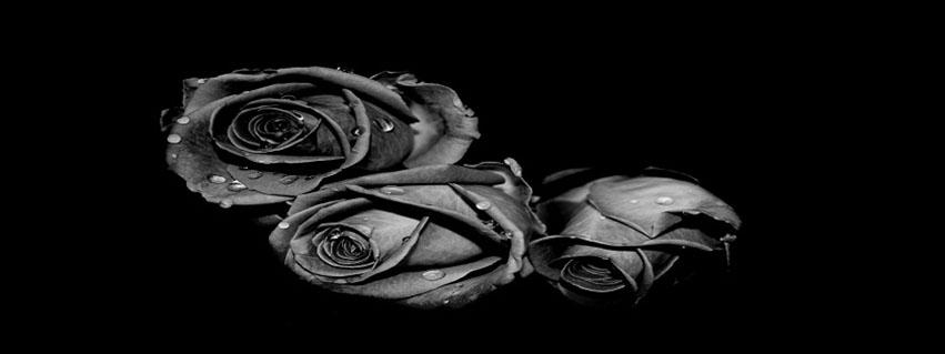 cover facebook hoa hồng đen tượng trưng cho đam mê và khát vọng số 13