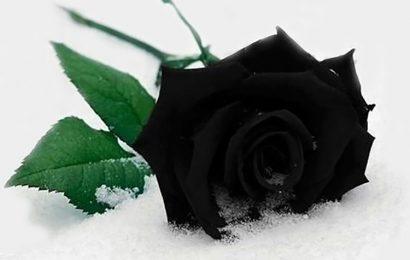 Top 30 ảnh bìa facebook hoa hồng đen tượng trưng cho đam mê và khát vọng