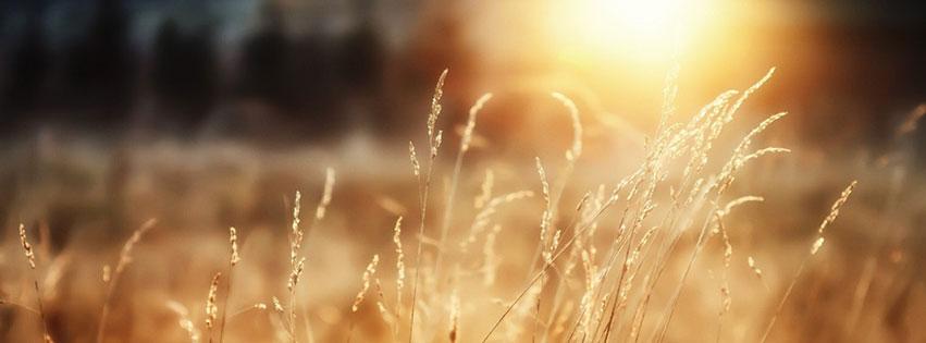 Cover facebook về nắng vàng rực rỡ kèm status đầy ý nghĩa số 6