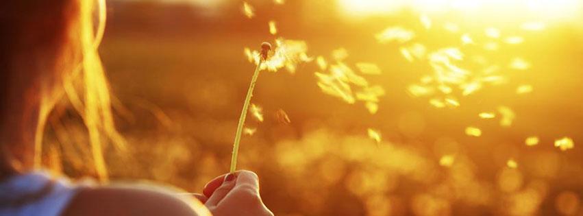 Cover facebook về nắng vàng rực rỡ kèm status đầy ý nghĩa