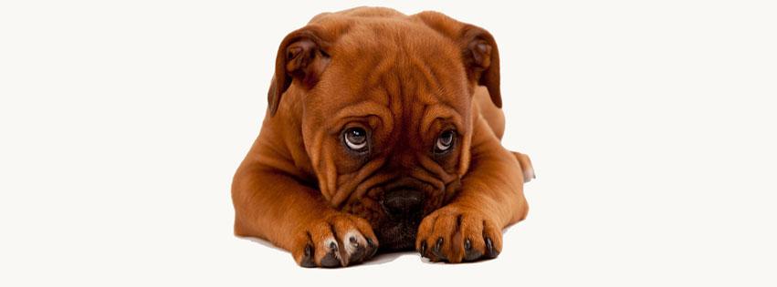 Cover facebook về những chú chó thật dễ thương số 18