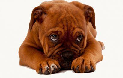 Top 20 ảnh bìa facebook về những chú chó thật dễ thương