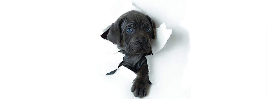 Cover facebook về những chú chó thật dễ thương số 4