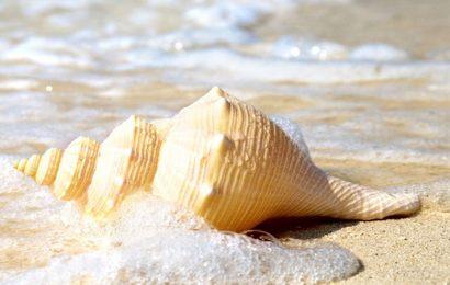 Top 50 hình nền mùa hè – Summer cho điện thoại cực chất