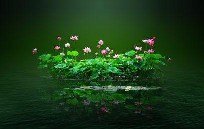 Top 50 hình nền hoa sen đẹp mê lòng người chất lượng full hd cho máy tính