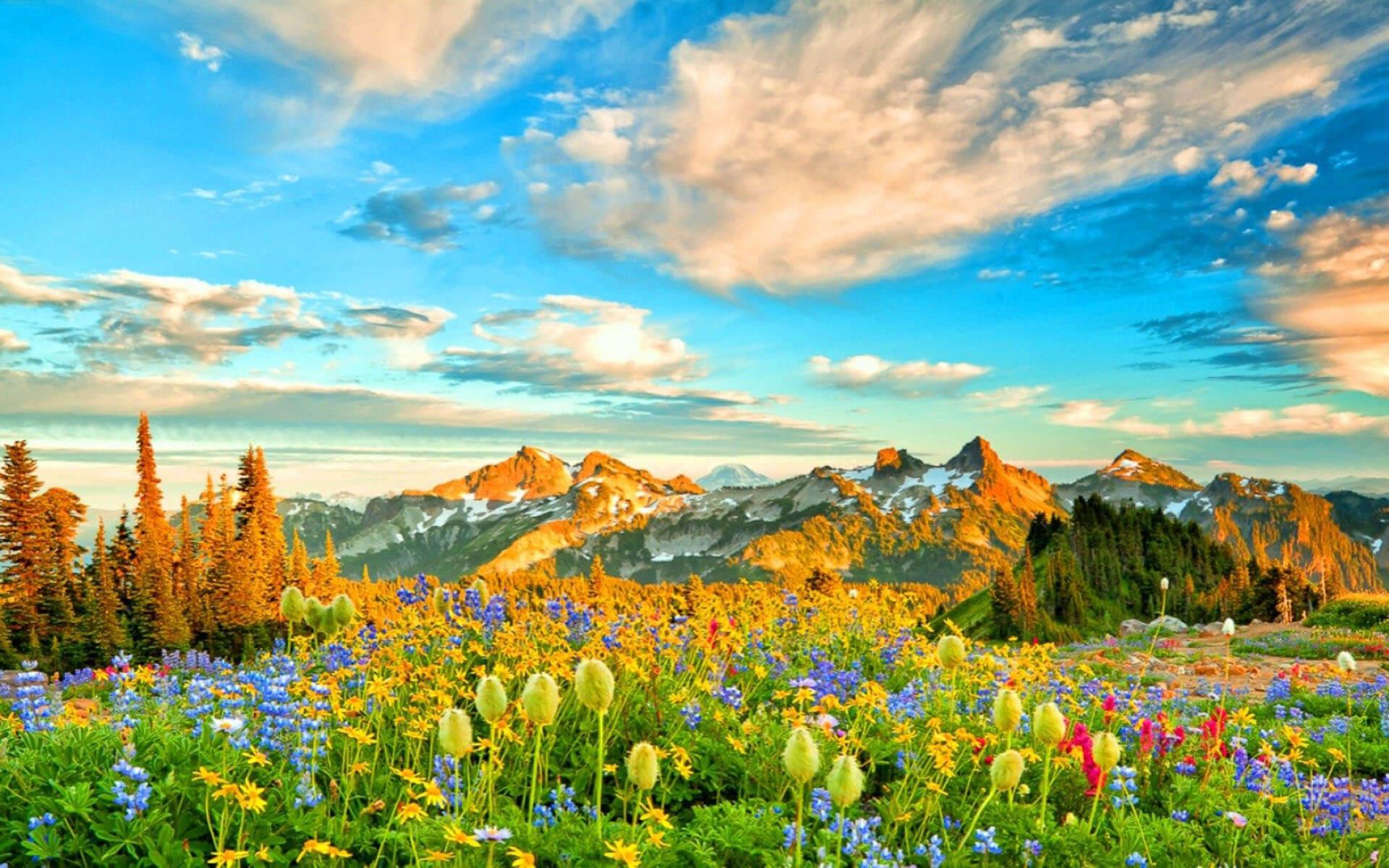 hình ảnh và hình nền thiên nhiên mùa xuân lung linh sắc hoa số 31