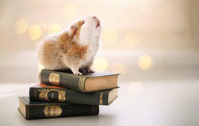 Top 30 hình ảnh và hình nền con chuột Hamster cho máy tính và laptop