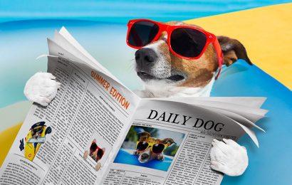 Bộ sưu tập 50 hình nền con chó ngầu đáng yêu đẹp chất lượng full hd free