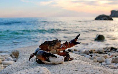 Top 50 hình ảnh và nền phong cảnh thiên nhiên Bờ Biển thơ mộng full hd