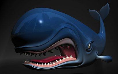 Share top 50 hình ảnh và nền động vật con Cá Voi xanh ngoài biển khơi full hd