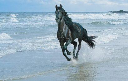 Share top 50 hình ảnh và nền con Ngựa tung tăng bên bờ biển thơ mộng